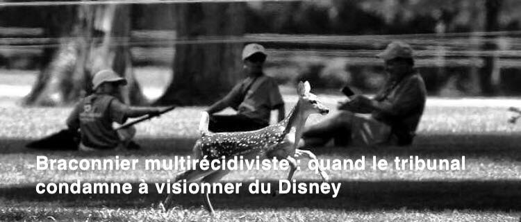 Pénal. Braconnier multirécidiviste: quand le tribunal condamne à visionner du Disney