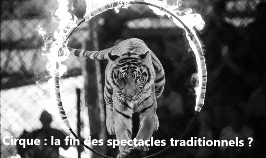 Loi. Cirque : la fin des spectacles traditionnels ?
